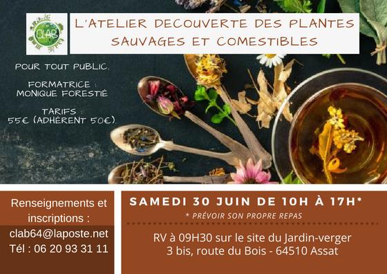 Flyer Plantes sauvages et comestibles 30.06.18